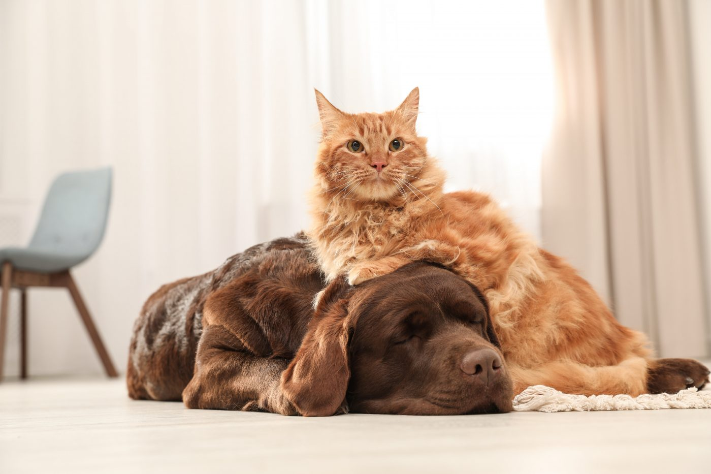 A cat and a dog calmly sitting on the floor belchonock © 123rf